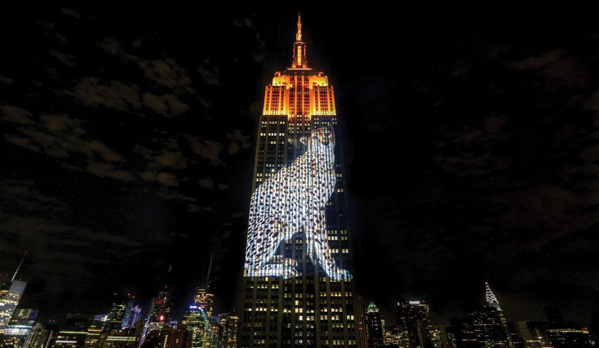 Вплоть до 2012года впарадной подсветке использовалось только девять цветов. Это было связано сограниченными возможностями системы прожекторов. В2012году врамках модернизации небоскреба она была заменена на систему динамического светодиодного освещения, ипосле этого гамма подсветки знаменитого небоскреба расширилась до 16 миллионов цветов.